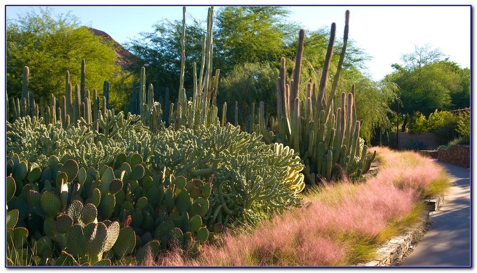 Desert Botanical Garden Phoenix Hours
