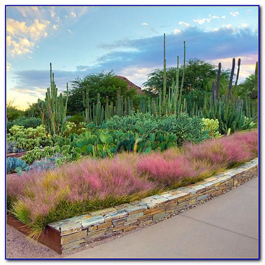 Desert Botanical Garden Phoenix Restaurant