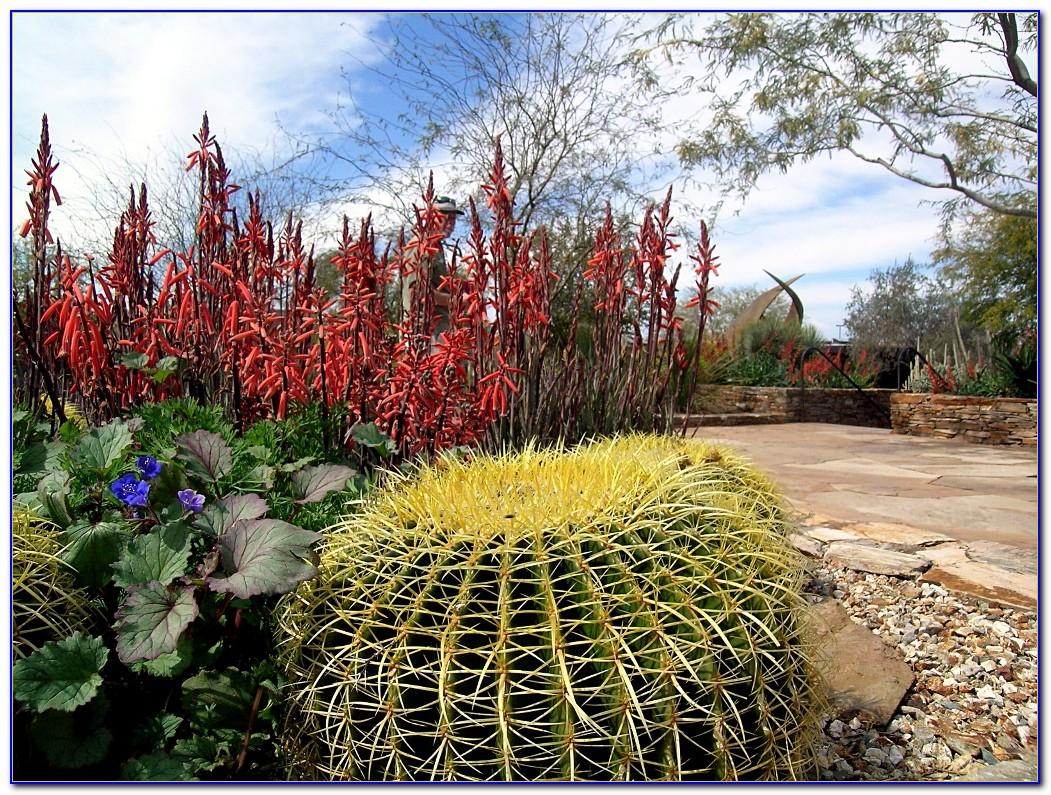 Desert Botanical Garden Phoenix Wedding