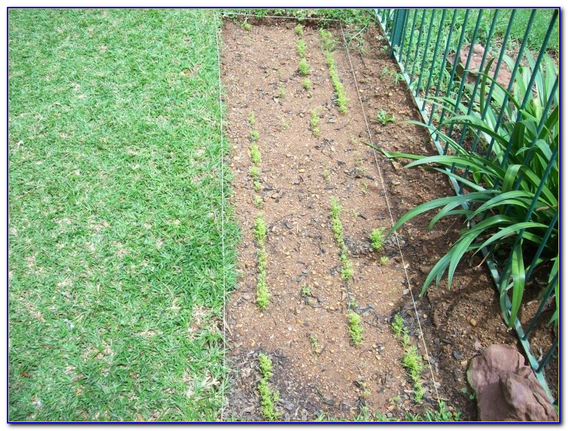 Square Foot Gardening Spacing Uk