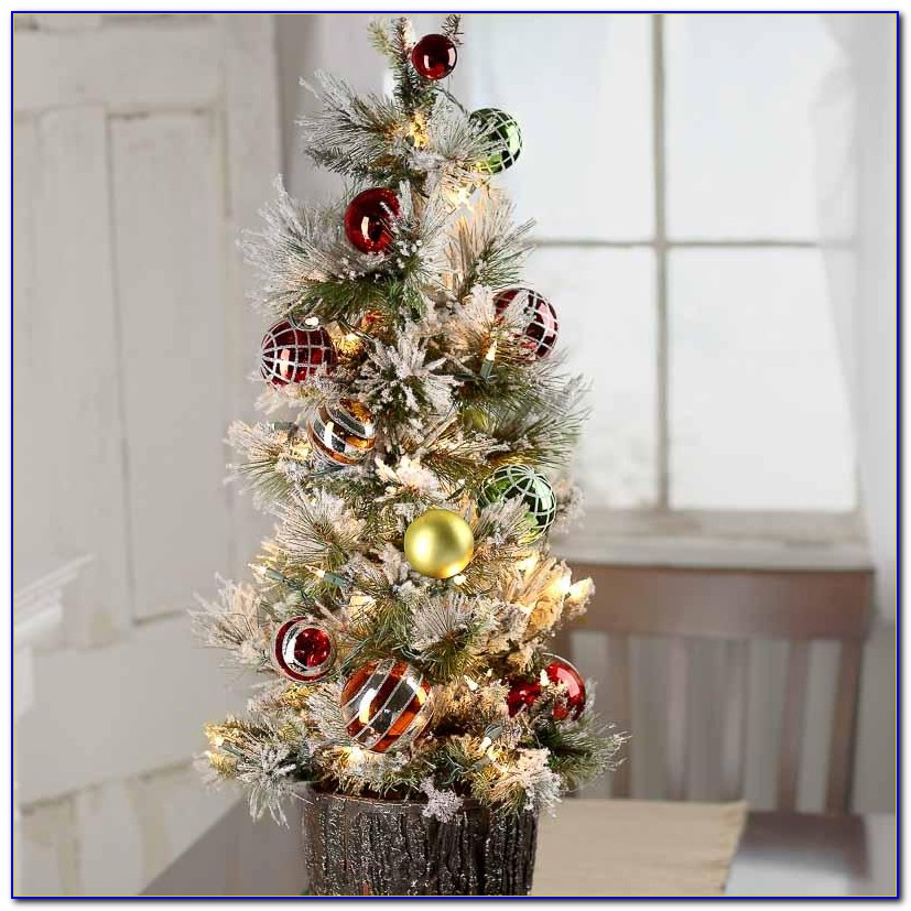 Live Decorated Tabletop Christmas Trees