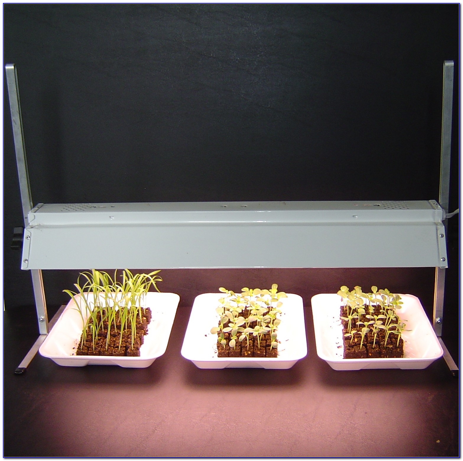 Table Top Grow Light System