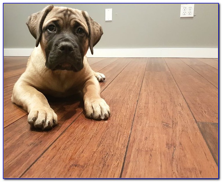 Bamboo Flooring And Dogs