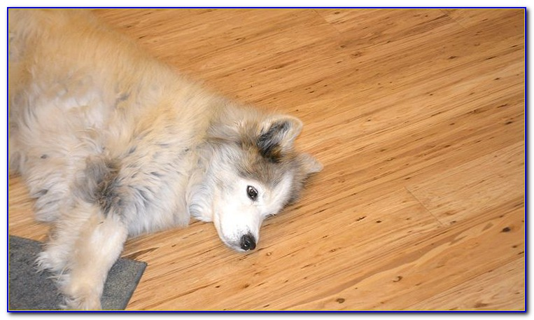 Bamboo Flooring And Large Dogs