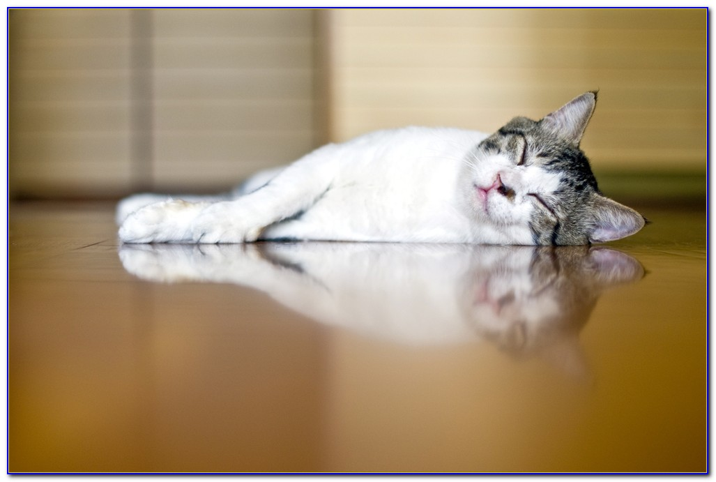 Best Type Of Flooring For Pet Owners