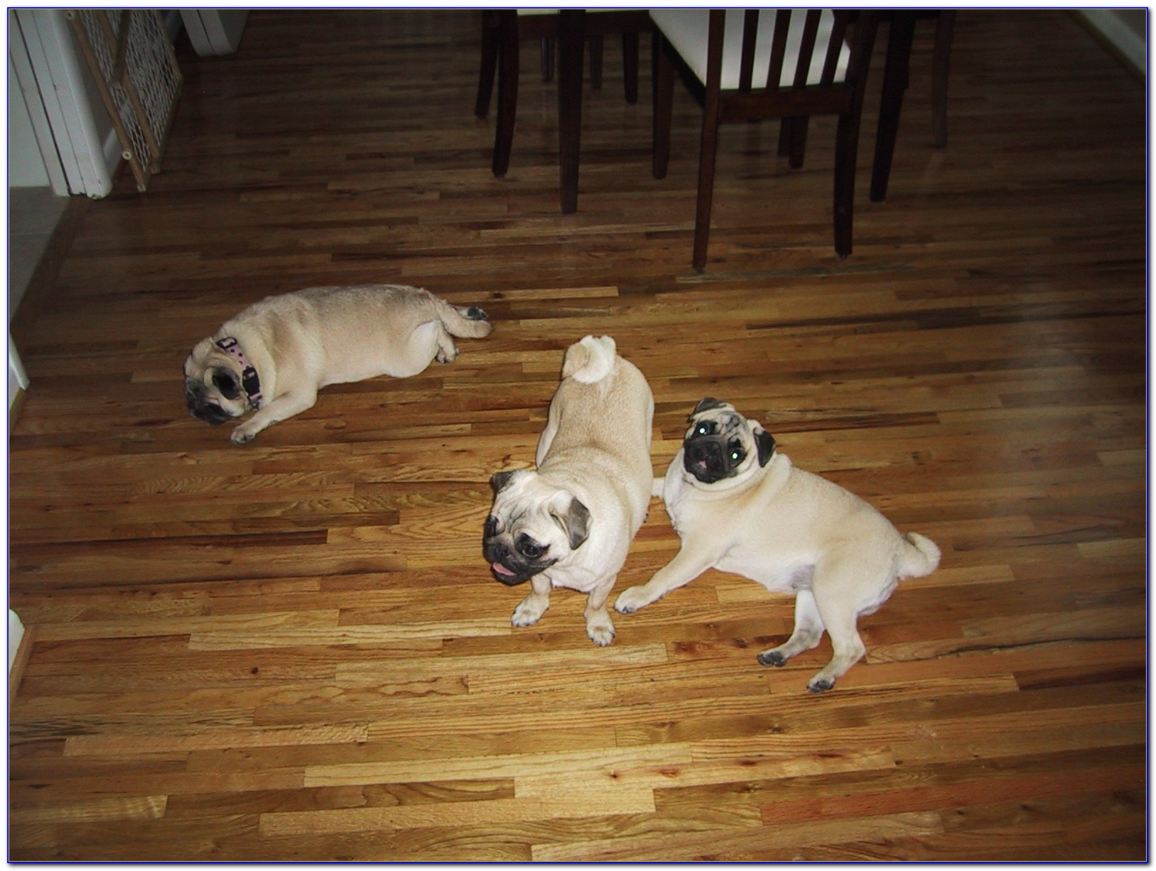 Engineered Hardwood Floors For Dogs