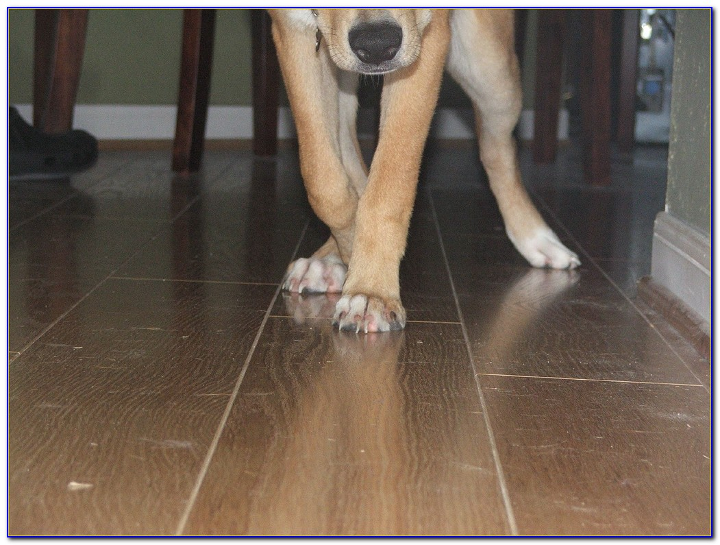 Hardwood Floors For Dogs