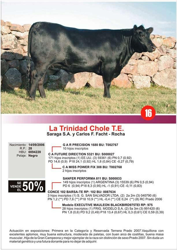 lote16_1