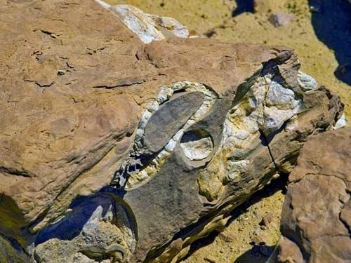 Viếng thung lũng cá voi hóa thạch ở Ai Cập - 4