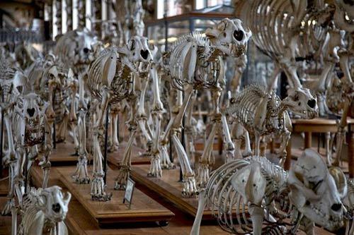 Cuộc diễu hành của những bộ xương ở bảo tàng Pháp - 6