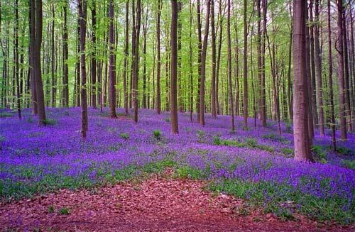 Lạc giữa khu rừng cổ tích đẹp mê hồn ở Bỉ - 5