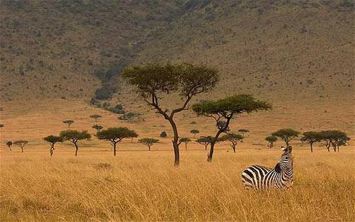 Khám phá thiên đường hoang dã Kenya - 5