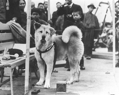 Chuyện cảm động về 8 chú chó trung thành nhất thế giới - 8