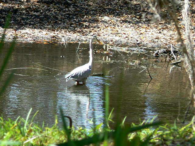 birds-pond-snake-011-1