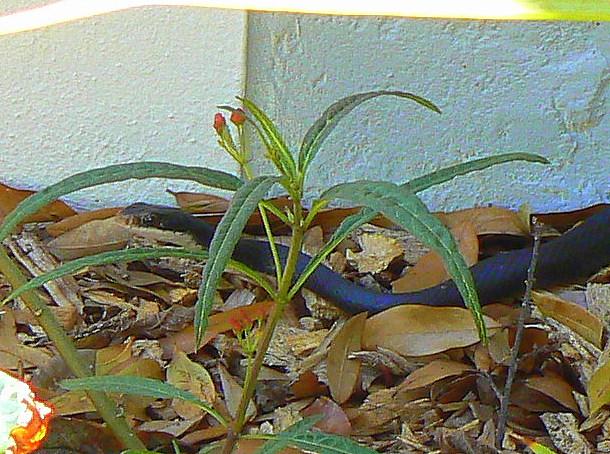 birds-pond-snake-041-1