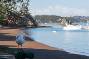 Contemplating Sea-gull in the early morning