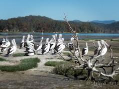 Burrill Lake -16