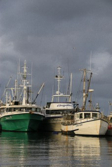 Ulladulla Harbour this afternoon-10