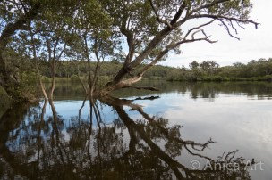 Narrawallee Inlet - up the river (4)