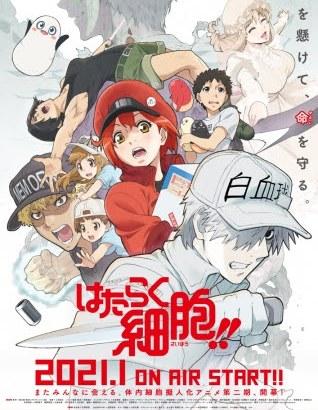 アニメ2期『はたらく細胞!!』放送時期は2021年1月!PV動画・キービジュアル画像公開!
