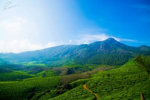 devikulam landscape :)
