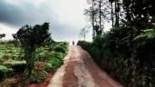 road to calvary