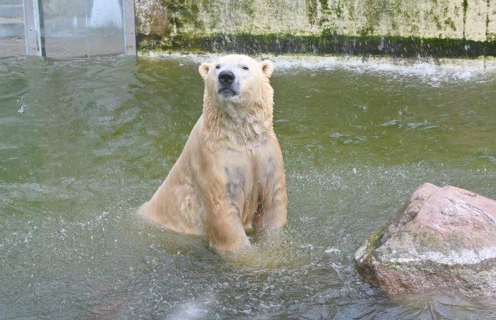 一張含有 熊, 水, 室外, 動物 的圖片  自動產生的描述