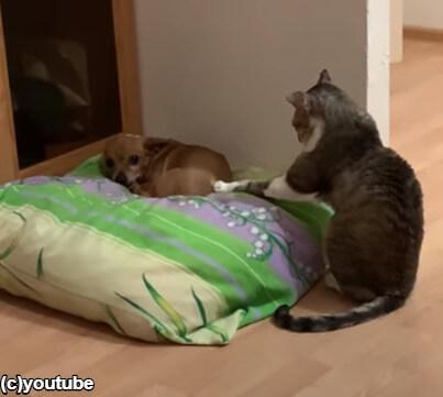 ピトッと犬に手をあてる猫