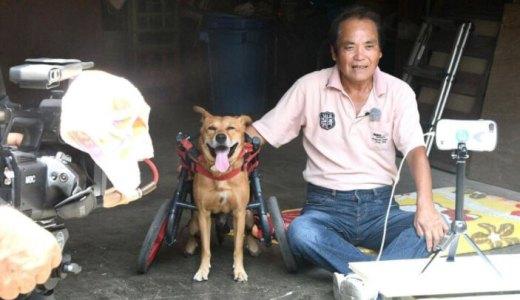 徳之島で起こった奇跡!車いす犬のラッキーと一人の男性の物語「支えられていたのは自分でした」