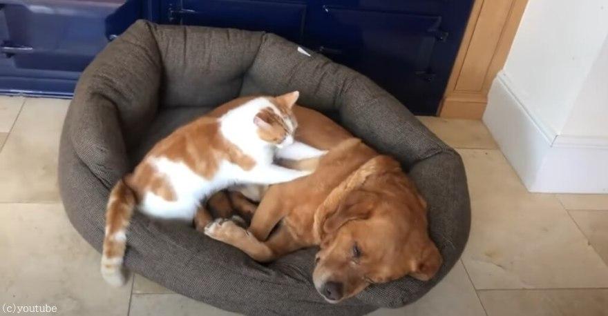 【犬は熟睡、猫はモミモミ】猫のマッサージ屋さんの腕前に、すっかりリラックスした犬は夢の中へ