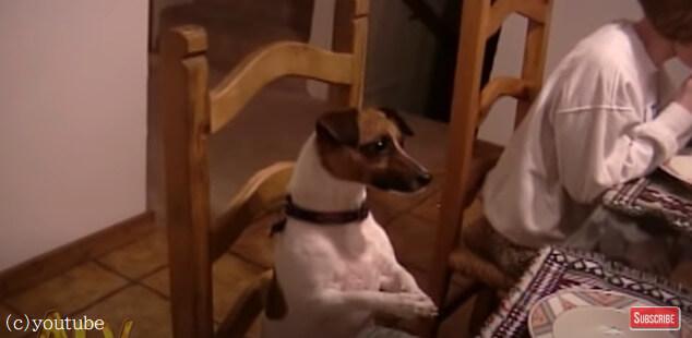 【食事の前の御祈りは当たり前!】家族と一緒に祈りをささげる犬が賢いと話題
