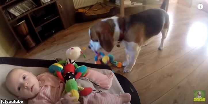 【心あたたまる】赤ちゃんのおもちゃを取ったらギャン泣き…犬がとった行動とは?