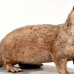 野生のカワウソを日本で確認か?38年振りに観測