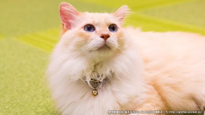 猫カフェ日記「猫まるカフェEast」