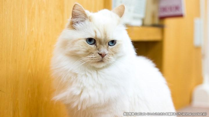 猫カフェ「CatCafe にゃんこと」