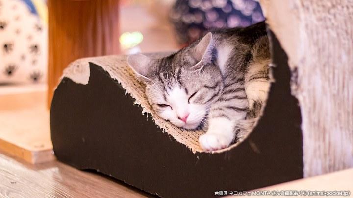 猫カフェ「ネコカフェ MONTA」