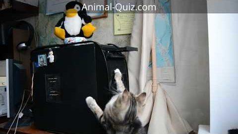 Kitty attacks DVD & XBOX drive