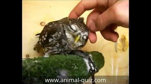 Cute owls having fun