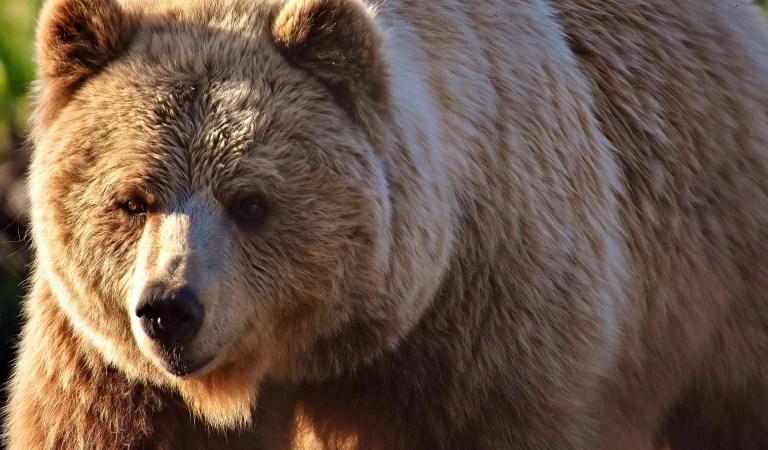 The Bear Quiz