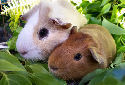 Click to learn about Small Animals