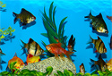 Click to learn about Aquarium Tropical Fish
