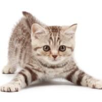 Lovely Kitty Cats