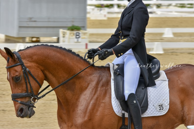 Dressage Jersey Fresh International