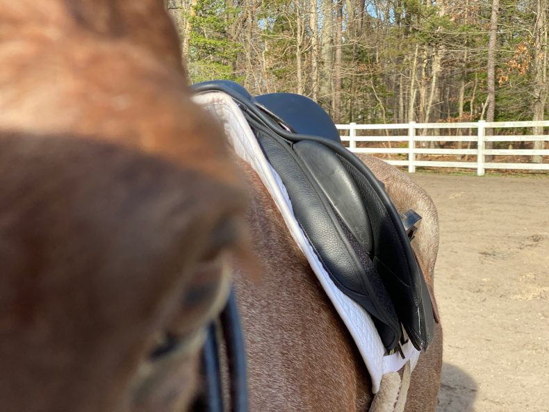 Horse & Rider Saddle Fit New Jersey