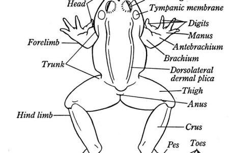 Interior Internal Frog Diagram Electronic Wallpaper Electronic