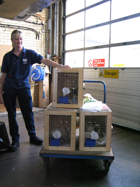 3 Siamese cats go to South Africa