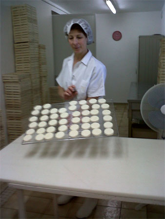 A tray of fresh goat's cheese france