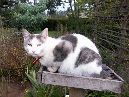 Fang on his garden table