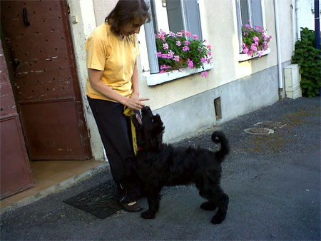 Pasha the dog arrives in France with his new owner