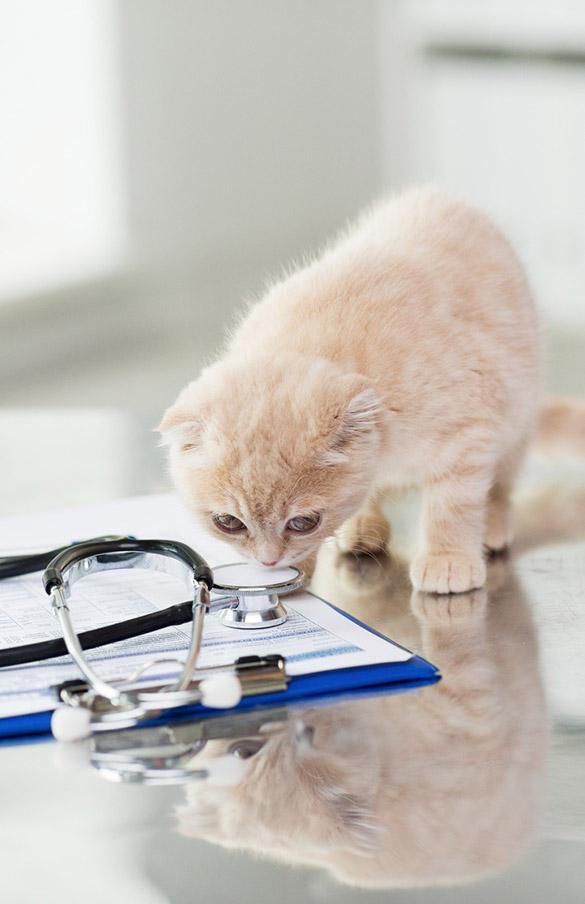 Vaccinazione-per-cani-e-gatti-2